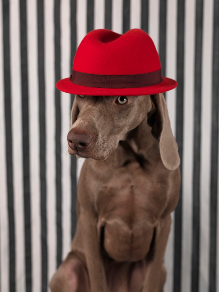 William Wegman, 2012. Image courtesy of www.artspace.com