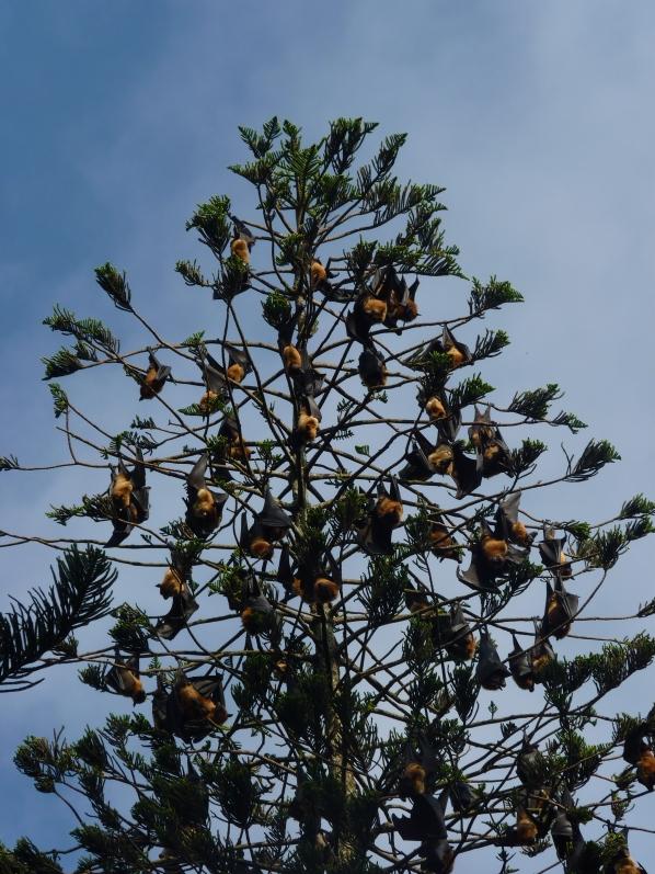 bat tree 1