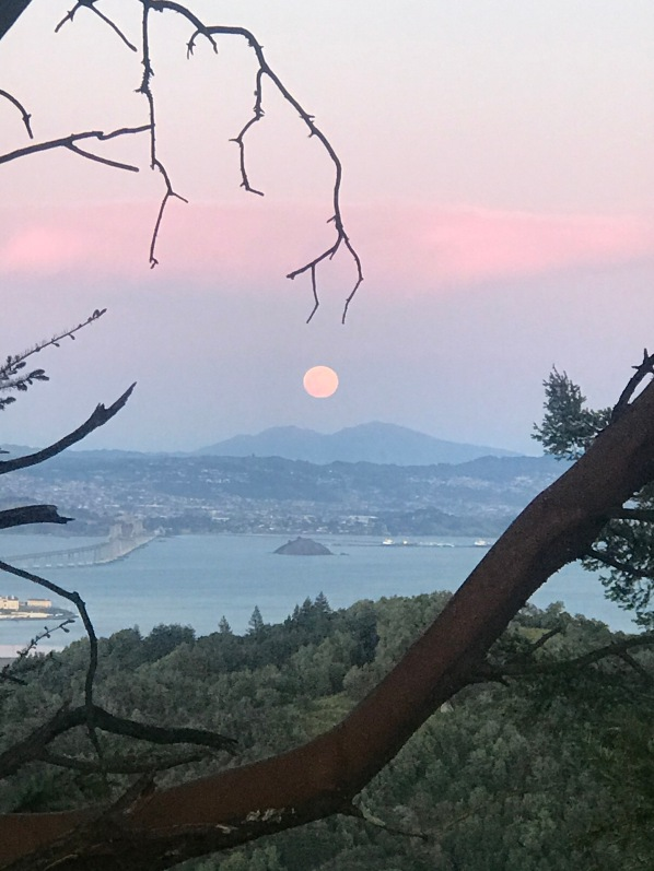 April 2020 pink moon