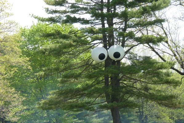 trees see